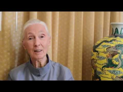Jane Goodall Institute - YouTube Subscribe Invitation