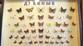 """""""Бийчанин коллекционирует бабочек"""" (Будни, 08.02.17г., Бийское телевидение)"""