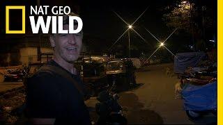 Urban Leopard Search   Maneater Manhunt