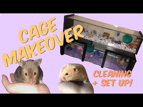 HAMSTER CAGE MAKEOVER! | cleaning the Detolf cages