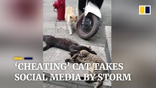 'Cheating' cat takes Chinese social media by storm