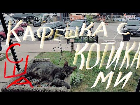The Best Cat Cafe In Iowa. Лучшая кофейня в штате Айова США . Valley Junction.