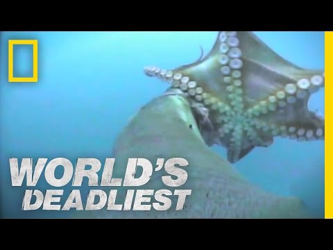 Sea Lion vs. Octopus | World's Deadliest