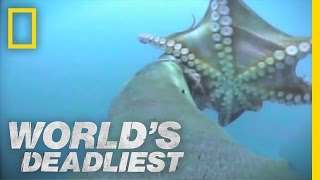 Sea Lion vs. Octopus | World's Deadliest