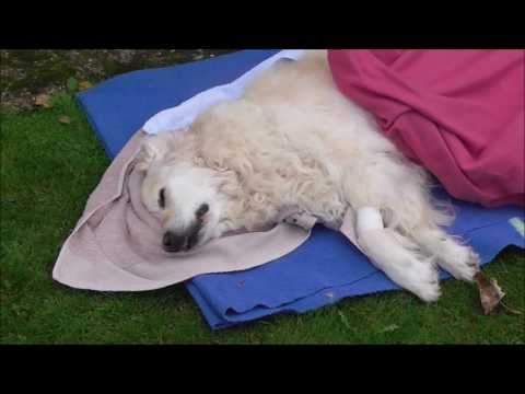 My dog had to be put down - Warning video footage