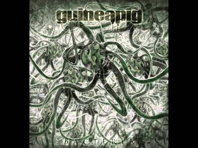 Guineapig - Pathogen Stimulator