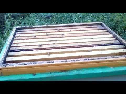 Результат обработки пчел от клеща препаратом Аква-Фло