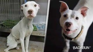 10 Perros antes y después de ser rescatados