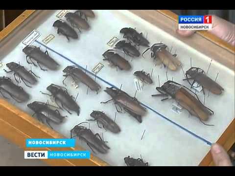 Новая Красная книга будет издана в России