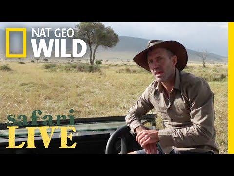 Safari Live - Day 20 | Nat Geo WILD