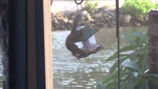 Difference Between Squirrel Proof Bird Feeder And Regular One