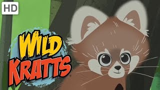 Wild Kratts - Discover Pandas and More Bears!
