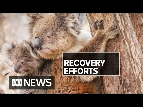 Inside the race to protect 250 threatened species hit by bushfire   ABC News