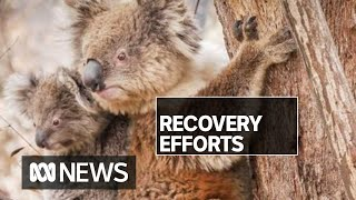 Inside the race to protect 250 threatened species hit by bushfire | ABC News