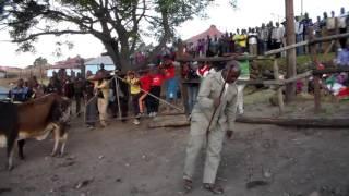 Download Amakhosi akwaNdlovu ngokulandelana kwawo! by Baba Kwazi Ndlovu. Mp3