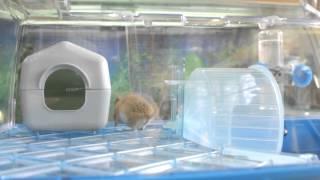Все О Домашних Животных: Снова Про Иглистых Мышей
