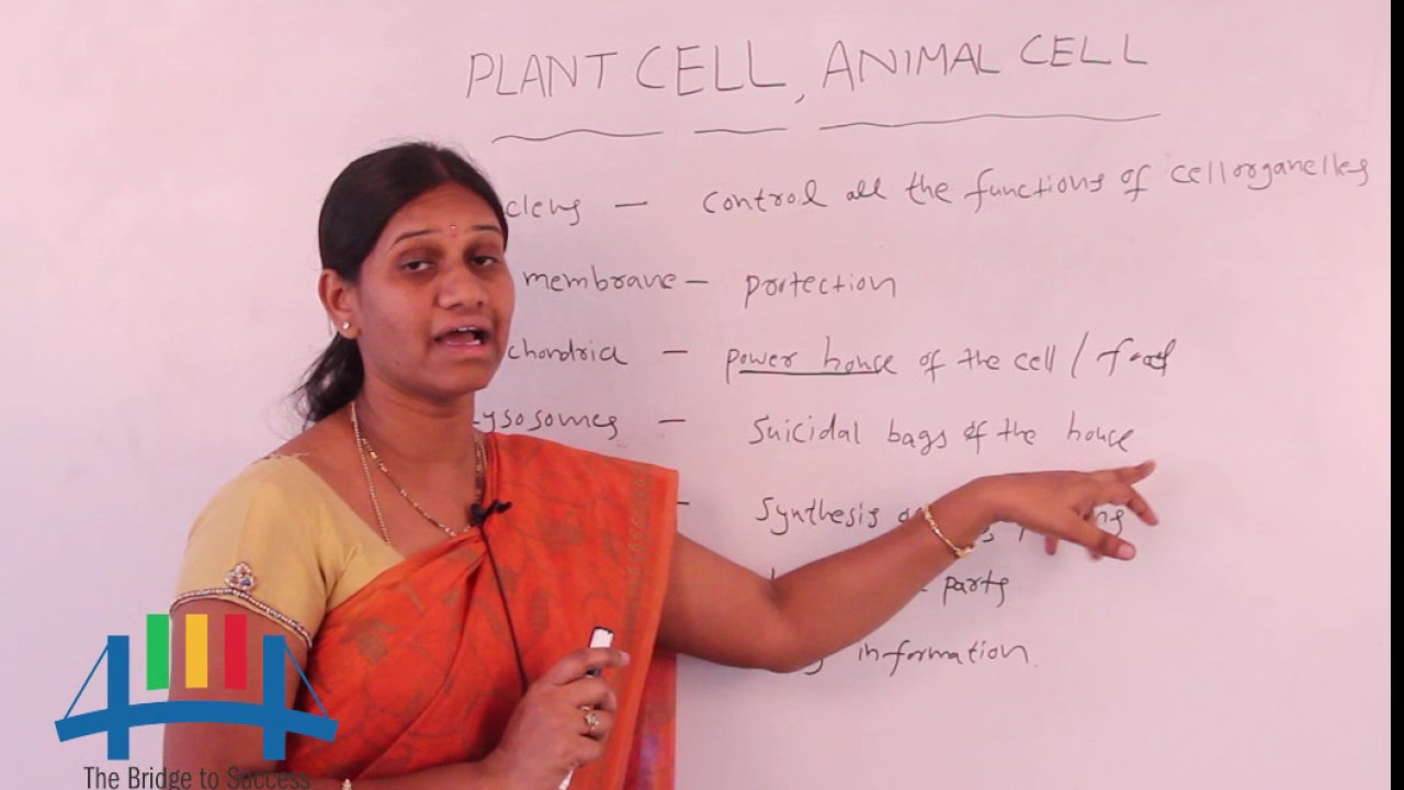difference between plant cell and animal cell for class 7