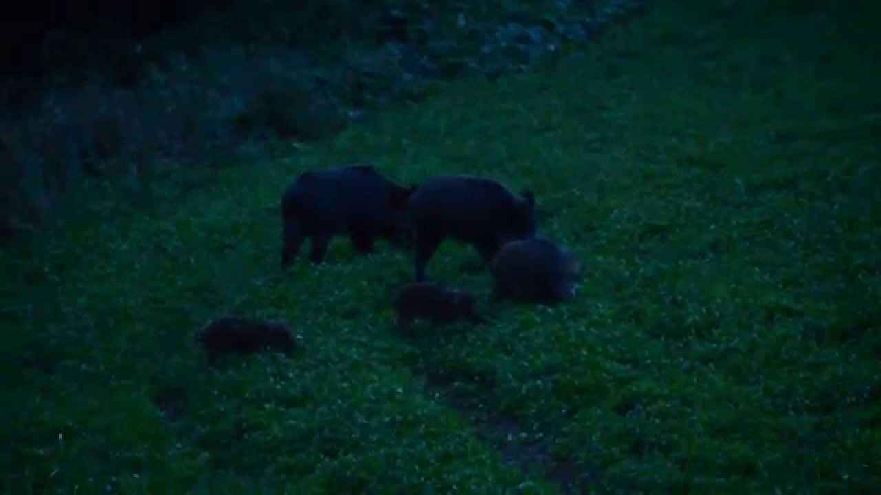Ulovenie diviačaťa (Wild Boar Hunt)