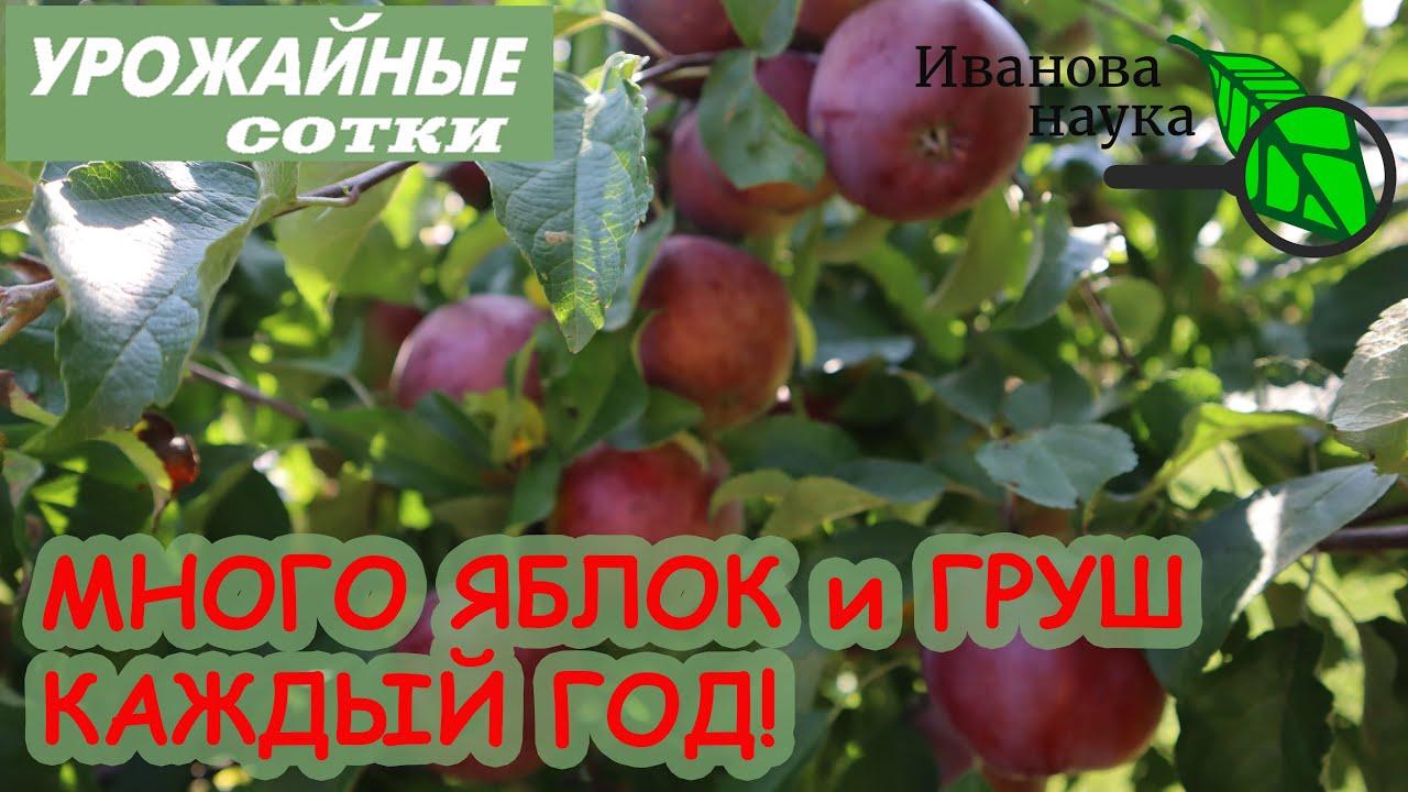 Посмотрите ЭТО ВИДЕО и будете ВСЕГДА С УРОЖАЕМ яблок, груш, слив, вишен, абрикосов и других фруктов!