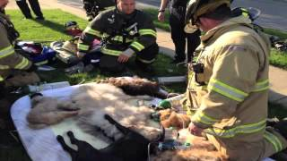 Animals rescued from Euclid fire