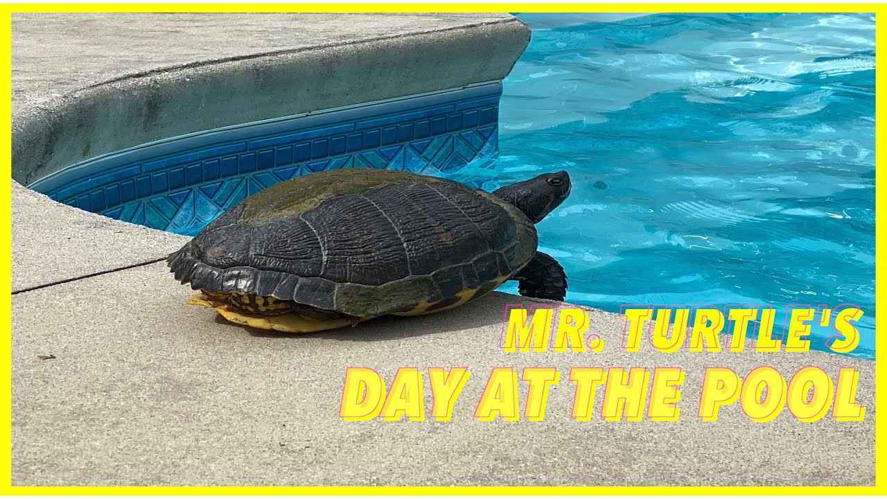 Download Mr. Turle's day at the pool