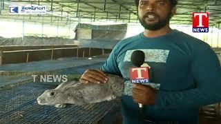 Chenu Chelaka   Farmer Suresh ABout Rabbit Breeding    11-11-2019  Telugu