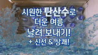 [11번가 꾸루 1기] 빙그레 산토리니 탄산수 플레인&…