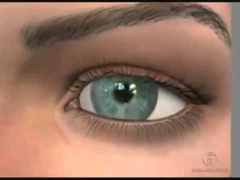 Сетчатка глаза - строение, функции и заболевания