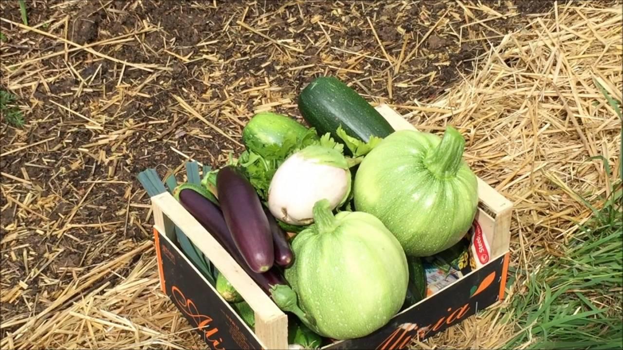 Mes buttes en permaculture avec la m thode philip forrer for Rendement permaculture