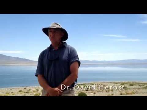 Saving Walker Lake, Nevada