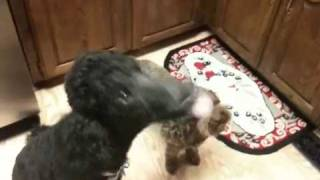 Poodles And Peanut Butter!