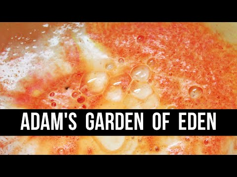 Royal Review : Adam's Garden of Eden | Royalty Soaps