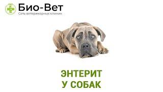 Энтерит у собак. Ветеринарная клиника БИО-ВЕТ.