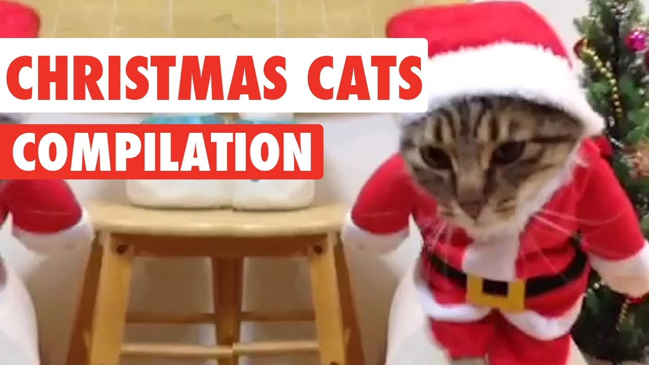 Christmas Cats Video Compilation 2016