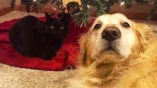 Реакция кота на ошейник своего ушедшего друга растрогала хозяев до слез