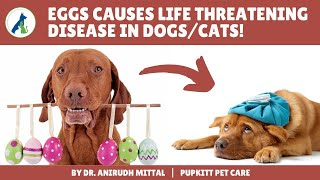 Common Pet Poisons: Dangerous food that acts as slow poison in dogs & cats | Pupkitt Pet Care