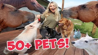 Feeding ALL My Pets TREATS in One Video | 50+ Pets!