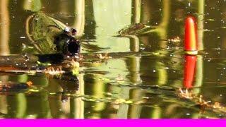 9-ПОКЛЕВКА на поплавочную удочку. Рыбалка в тишине, вдали от суеты. Поплавок увлекает. Fishing