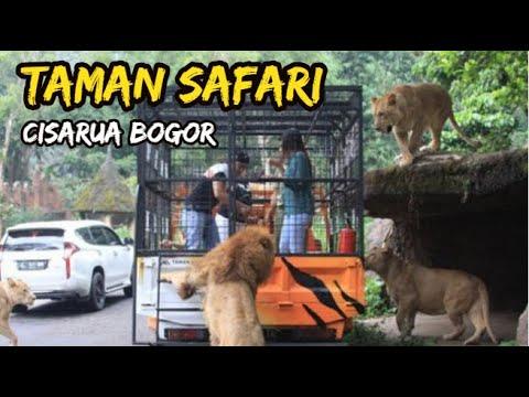 taman-safari-cisarua-bogor-terbaru-|-wisata-tanah-air