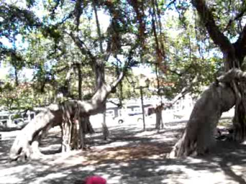 Seeattle.com - The Traveling Twins - Banyan Tree Park, Lahaina (Hawaii)