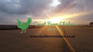 Welcome to Court Farm Chickens