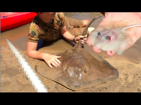Thumbnail: RARE FOOTAGE: Stingray Giving Birth, Boy Delivers 12 Stingrays! HD