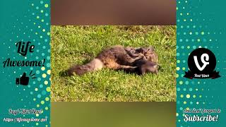Try Not To Laugh or smile Watching Funny Animals  Compilation 2018  impossible i bet 100000000 pound