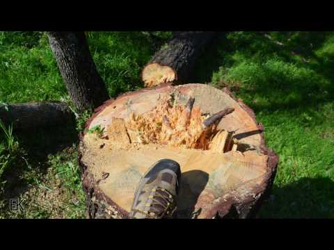 just-for-fun-my-neighbor-wanted-a-quick-drone-video-of-him-chopping-down-a-dead-pine-tree