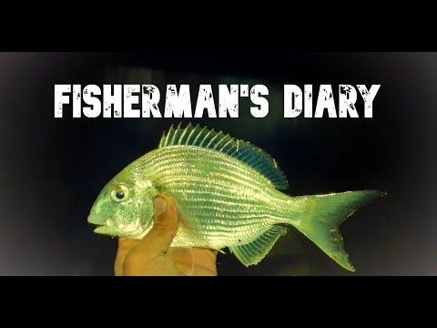 Ep 352: Noosa Beach Night Fishing For Bream And Whiting ~ Fisherman's Diary