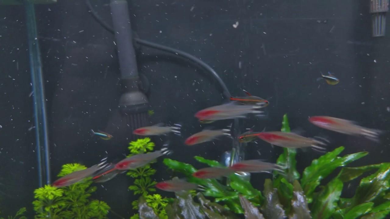 Apresentação - Meu aquário plantado de 200 litros em 4k