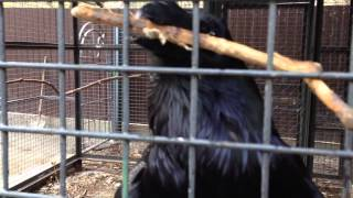 """Самая умная птица в мире, """"выполняет"""" комманду """"аппорт"""" как собака приносит палку"""