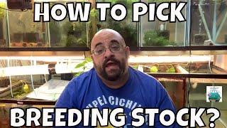 How to pick Breeding stock for Breeding for Profit Tub!