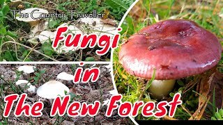 New Forest Fungi 2020 - edible or poisonous?
