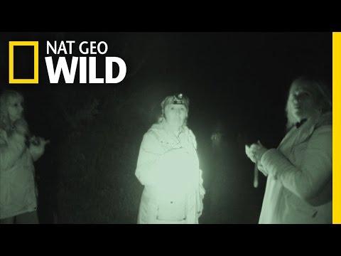 Ghost Hunters | Wild Scene Investigation